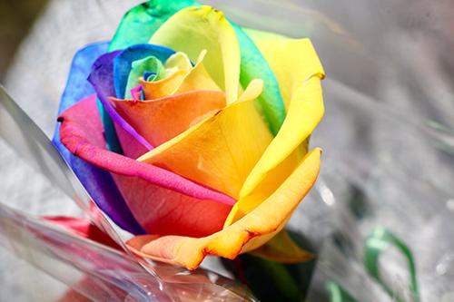 Regnbue rose